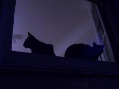 lapidge st silhouettes